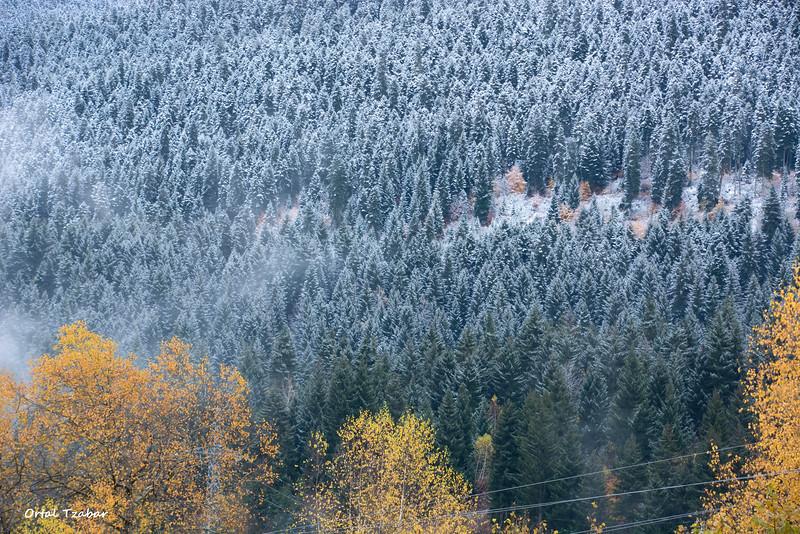 שלג ושלכת3.jpg