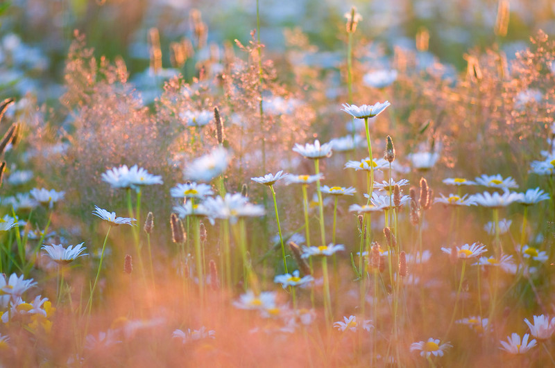 evening-meadow.jpg