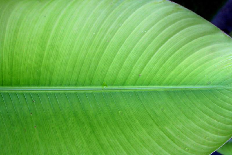 4351 Large Leaf.jpg