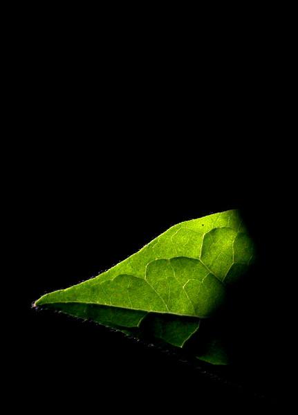 9870 Leaf Tip.jpg