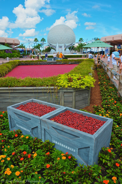 Ocean Spray's Cranberry Bog Exhibit at Epcot in Walt Disney World.