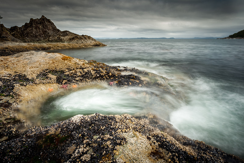 Ochre starfish (Pisaster ochraceus), Goose barnacles (Pollicipes polymerus) and California mussel (Mytilus californianus), rock pool, Vancouver Island, British Columbia
