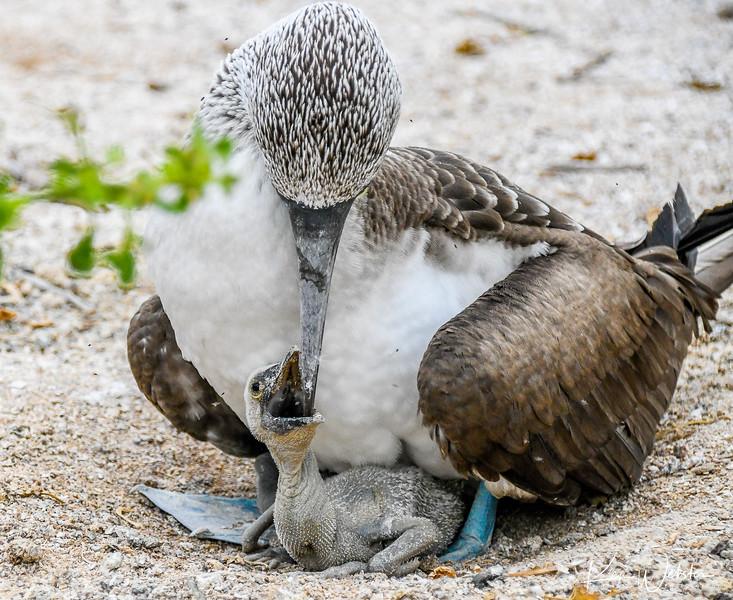 2018 Lobos Island-23.jpg