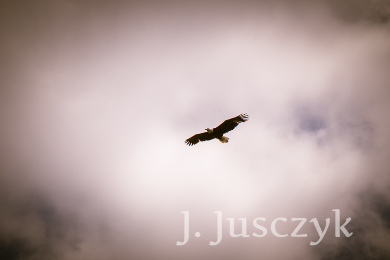 Jusczyk2021-6837.jpg