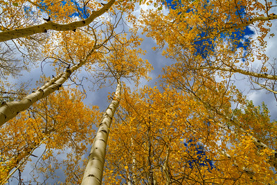 Colorado Rocky Mountains Fall Foliage