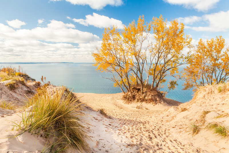 Trees, Sleeping Bear Dunes, Michigan