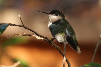 Some Nice Birds