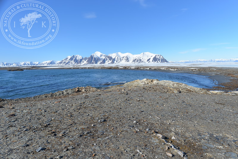 """The autonomous camera system has taken one hourly picture around the clock, from May 9th to July 12th in 2019, the last day when this Field Station camera registered two visiting polar bears, facing the camera in different directions. After this date, the camera continued to shoot until August 29th in 2019. All these pictures are published in a special gallery called """"Pictures 