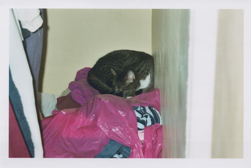 2005_Cats_0007.jpg