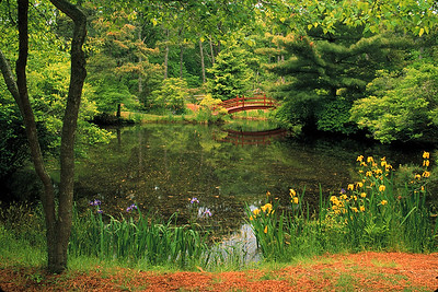 Mytoi Garden Chappaquidick