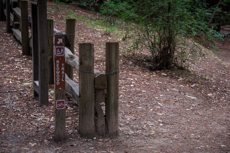 Redwood-51.jpg