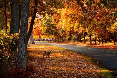Long Island Seasons