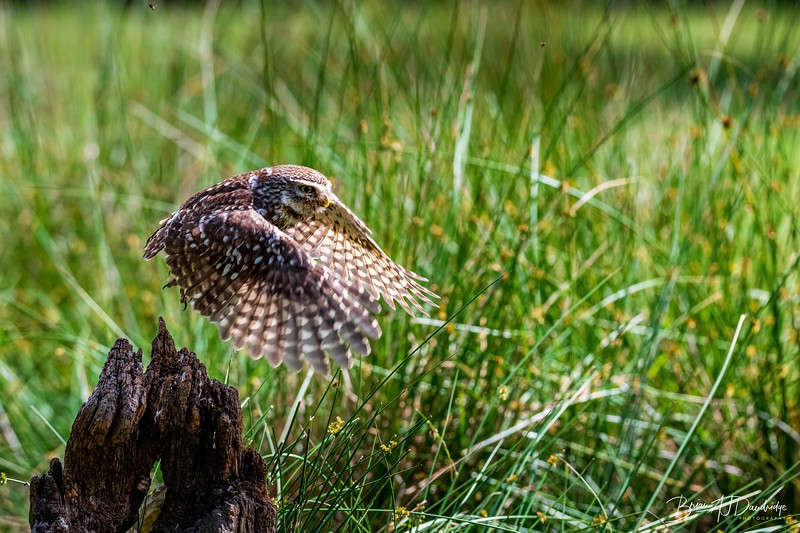 The Little Owl Shoot-6765.jpg