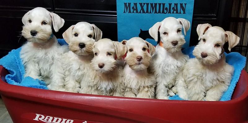 Bianca Pups 041.jpg