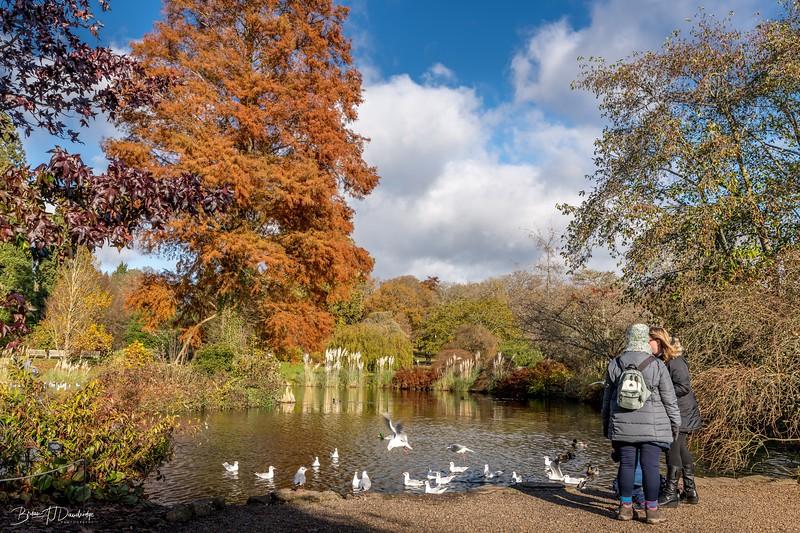 Wakehurst_Autumn-6080.jpg