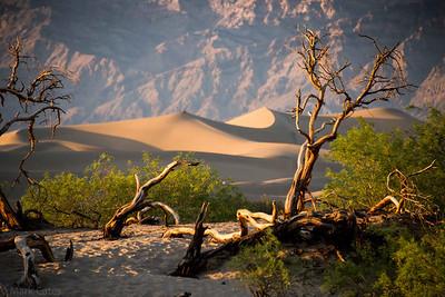 2014 LA to Death Valley Trip