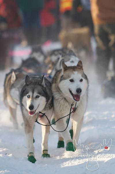 Yukon Quest 2012