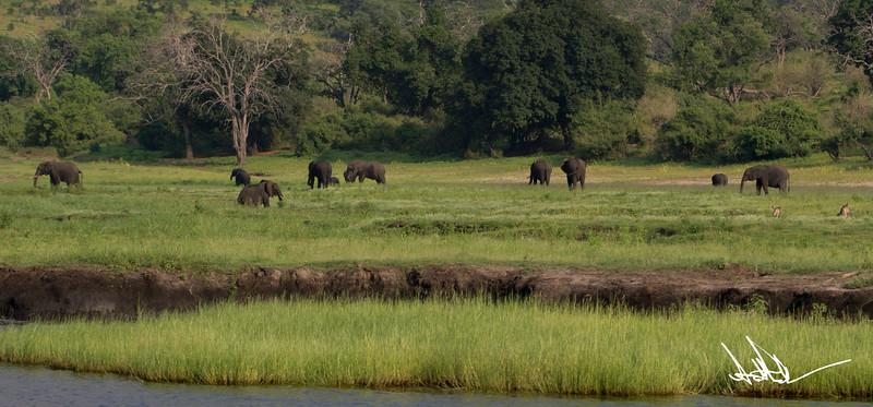 Botswana LandscapeS-22.jpg