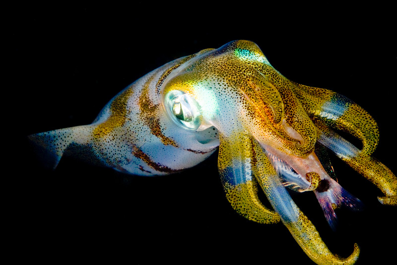 squid with fish  12x18.jpg