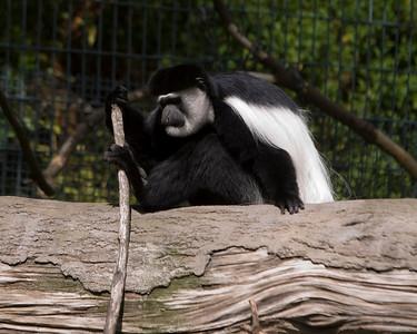 08-26-2008 - Oregon Zoo
