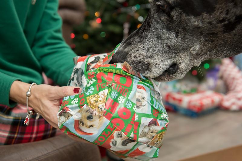 Doggy Christmas0005.jpg