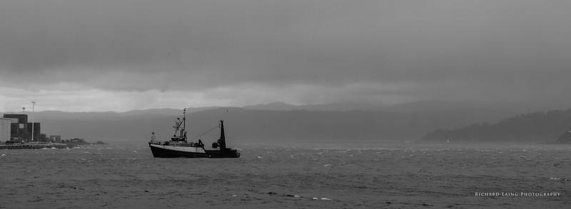2017-01-04-Wellington-379.jpg