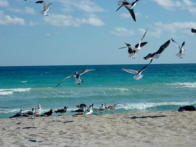 FL- Miami - 2010