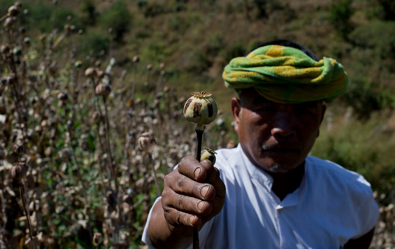 . Ethnic Pa-O poppy farmer holds a harvested poppy stem with dried-up opium sap in a poppy cultivation in central Shan state, Myanmar on Feb 19, 2013. Far from Myanmar\'s postcard-perfect pagodas and colonial relics, the remote mountain villages of southern Shan State do not appear on maps of Myanmar or in any guide books. In obscurity, they have been ground zero for Myanmar\'s drug trade which has thrived on poverty and corruption. (AP Photo/Gemunu Amarasinghe)