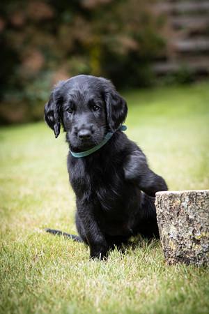 Alexander Pups