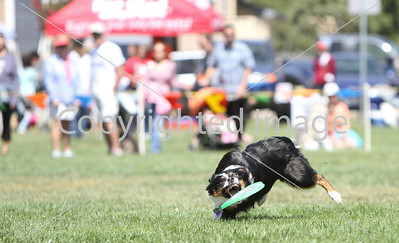Disc Dogs by the Bay ~Aug. '12