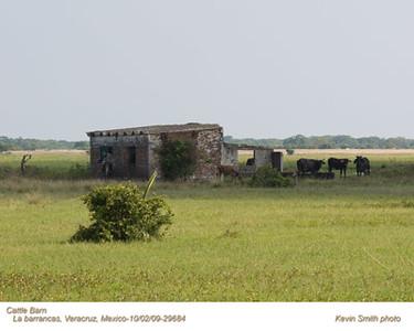 CattleBarn29684 copy.jpg