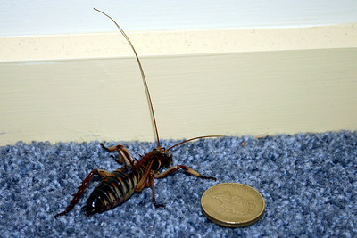 A Weta pair of jeans
