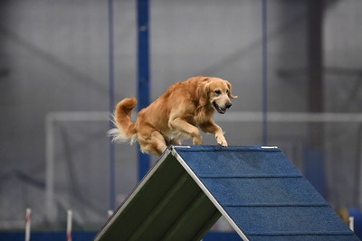 JAG AKC Agility Trial August 7-8