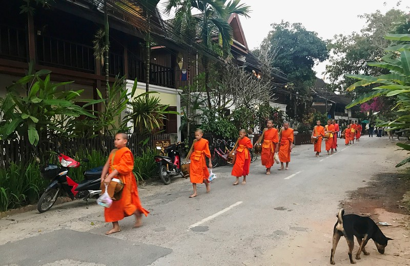 Every morning as the sun rises, around 200 saffron-clad monks pad barefoot through the streets to gather their daily meal from pious townsfolk who place tiny balls of sticky rice in their begging bowls. - Luang Prabang, Laos