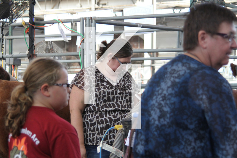 4-H Cattle - 2nd day