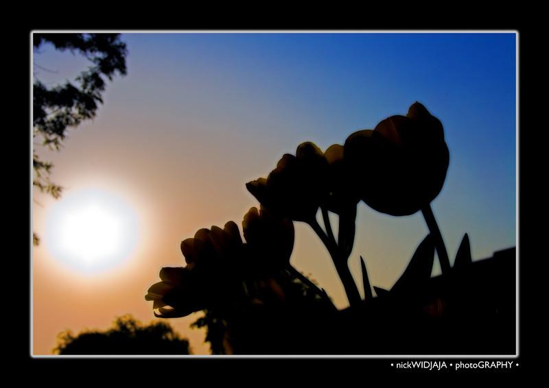 Tulips outdoor_32MB copy.jpg