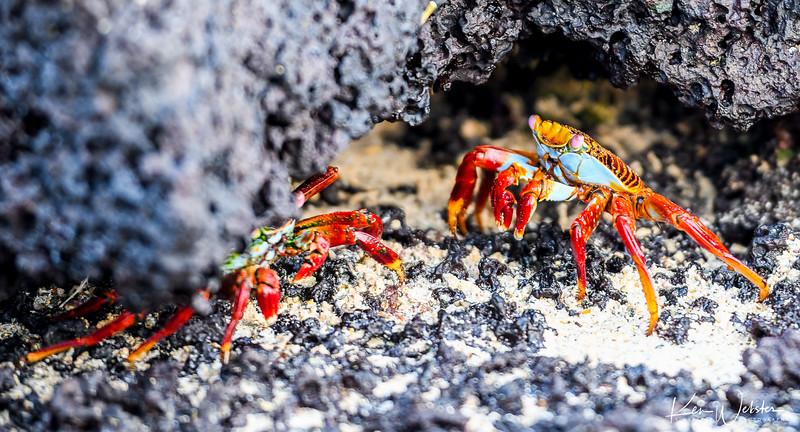 2018 Punta Cormorant-5.jpg