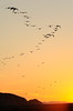 Pelicans at Sunrise - Bahia de Los Angles 2419 - 300