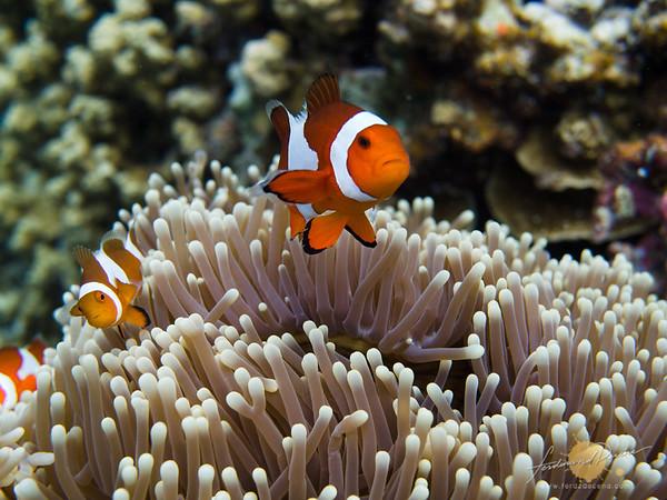 Noa Noa Island Underwater