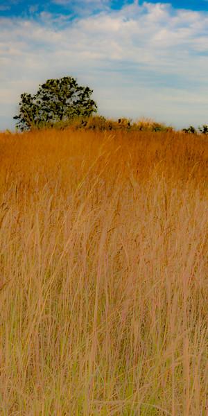 Prairie  11