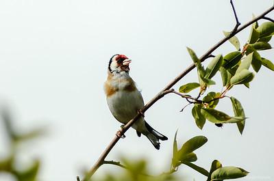 2012 Birds in the backyard
