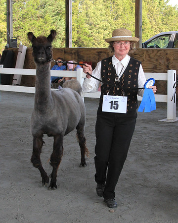 East Coast Invitational Llama Show, September 22, 2012