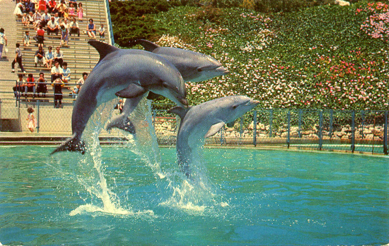 Leaping Dolphin Trio