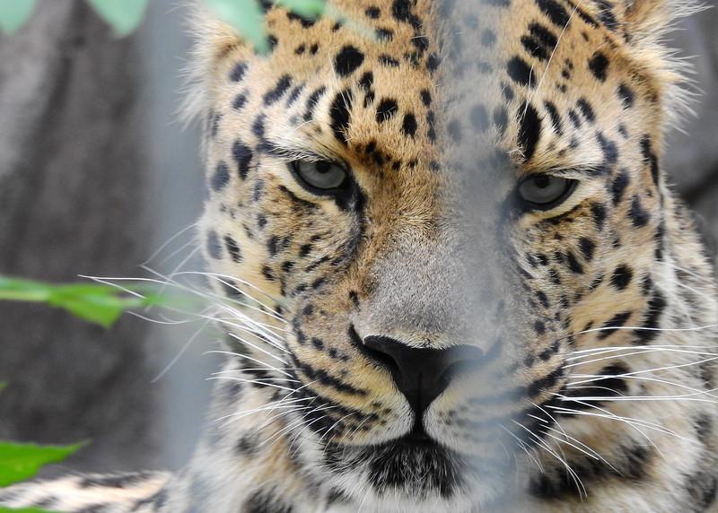 Denver Zoo 2018 (2610).JPG