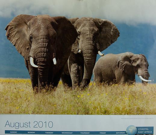 Elephants Michigan Golf Trip 2010
