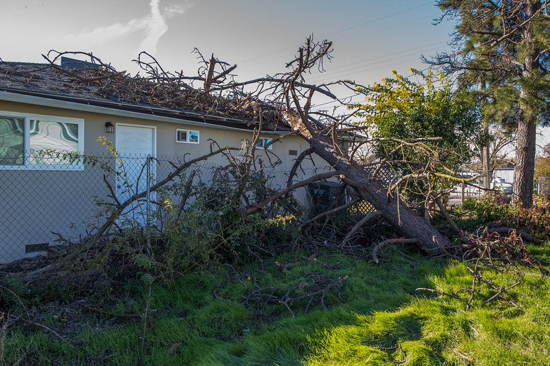 5671 Wallace Ave - Tree 1030am 12 16 2017 Extremly Windy Conditions-14.jpg