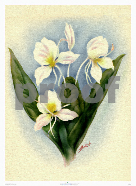 123: Ted Mundorff: Floral Art Print, ca 1940-1950. (PROOF watermark will not appear on your print)