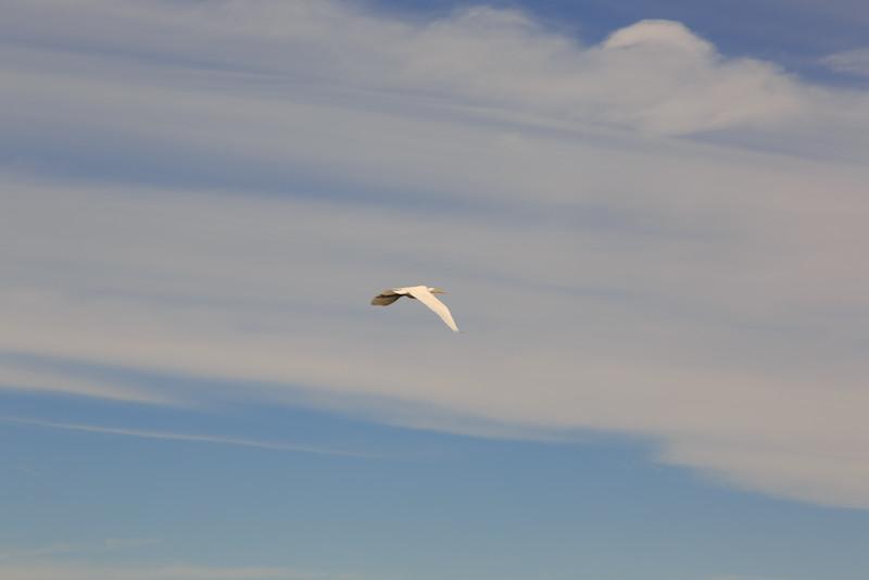 2014_10_24 Bald Head Island 012.jpg