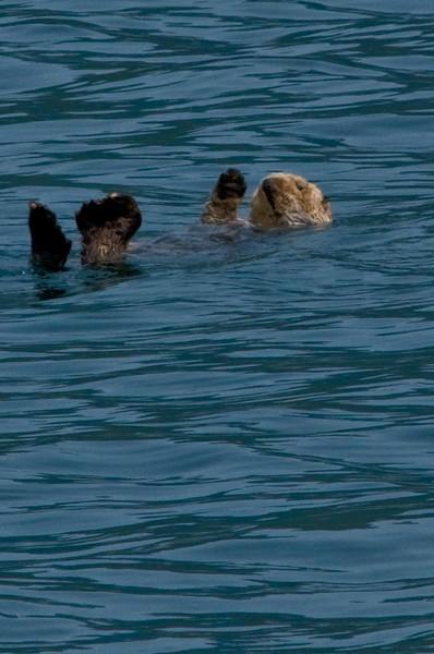 Copy of Otter-2.jpg