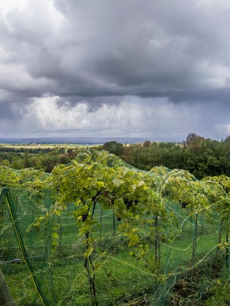 roost wine company vineyard.jpg